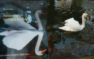 SANSONNETS UN CYGNE À L'ENVERS coup de coeur sur le blog Les livres d'Aline