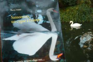 Sur Babelio Taylor la Mouette vous invite à lire SANSONNETS, UN CYGNE À L'ENVERS