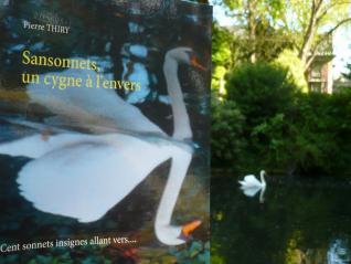 La Bibliothèque de Bérénice vous invite à lire SANSONNETS UN CYGNE À L'ENVERS cliquez ici