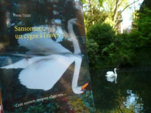 La Bibliothèque de Pitiponks vous invite à lire Sansonnets un cygne à l'envers