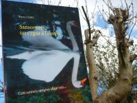 53e critique de SANSONNETS UN CYGNE À L'ENVERS sur le forum BABELIO. Cliquez ici